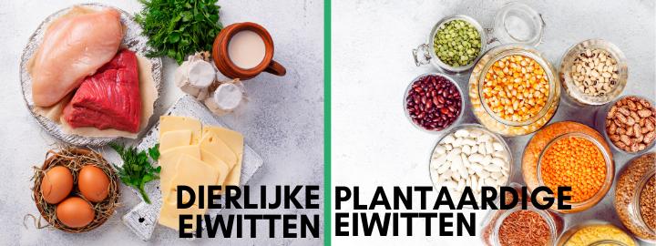 Dierlijke eiwitten en plantaardige eiwitten