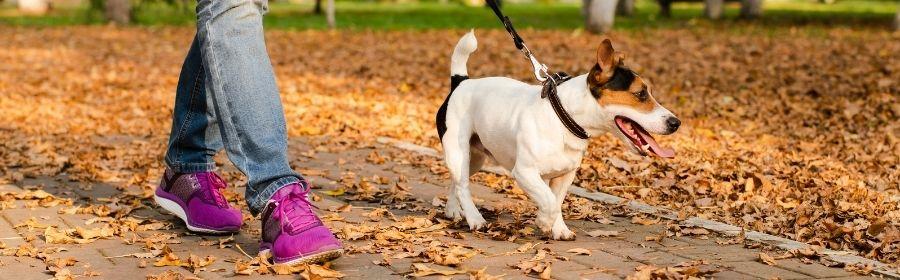 Stappen tellen door met hond te wandelen